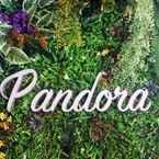 Reception Pandora After 80s Hostel