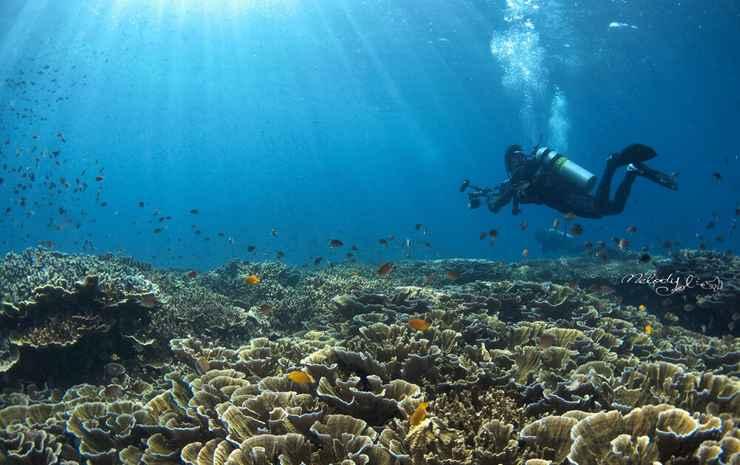 Turtle Bay Dive Resort Cebu