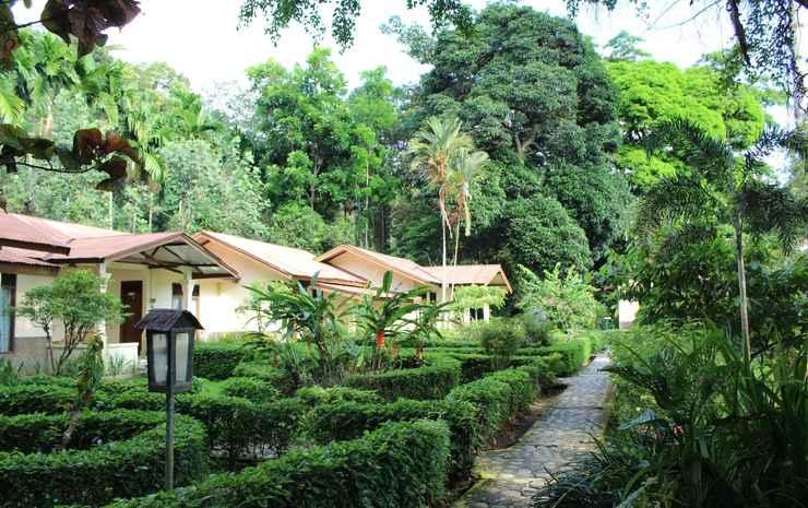 Ecolodge Bukit Lawang Resort Langkat - Siamang Hornbill