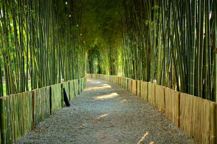 VIEW_ATTRACTIONS Bamboo Grove Chiangmai