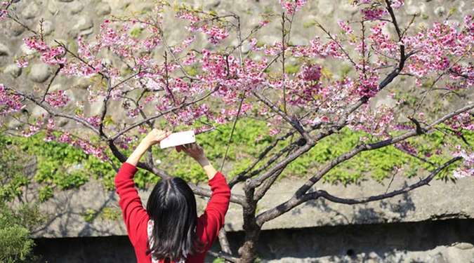 Blossoms com login php www Pearblossom Private