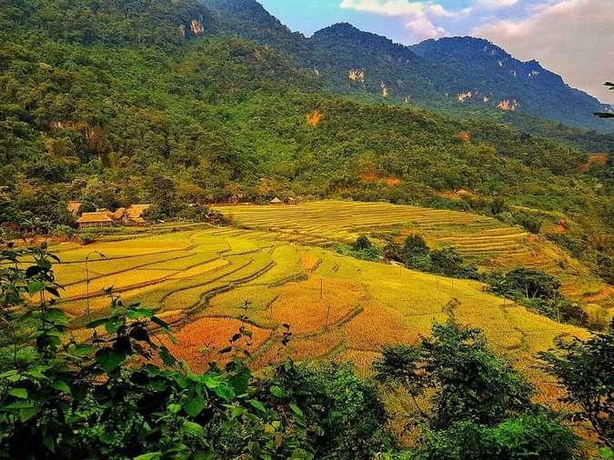 Mùa lúa chin vàng từ tháng 6 trở đi chính là thời điểm đẹp nhất để ghé đến Pù Luông
