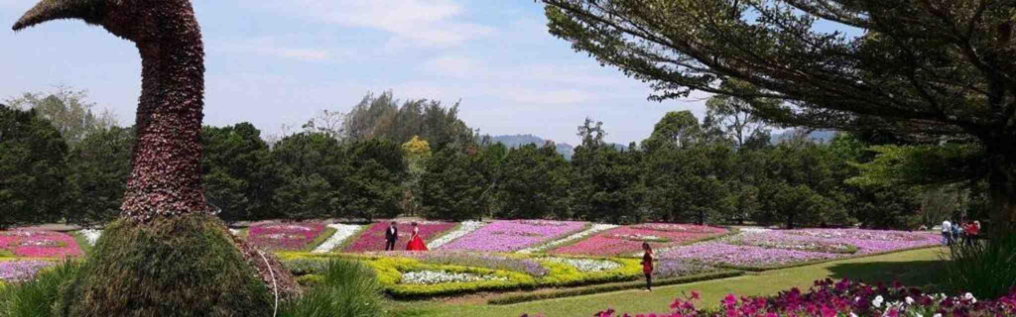10 Tempat Wisata di Bogor Tawarkan Pesona Alam Menakjubkan
