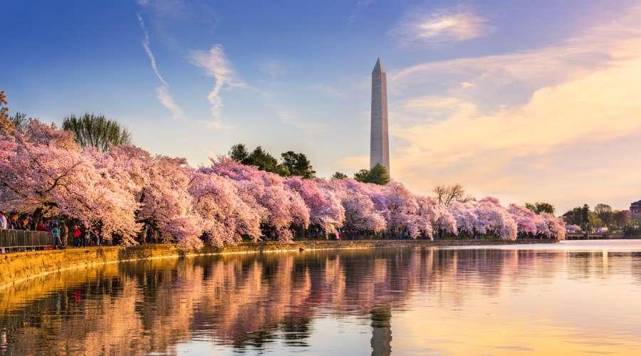 Cherry Blossom Forecast 2020 12 Best Places To See Sakura Around The World