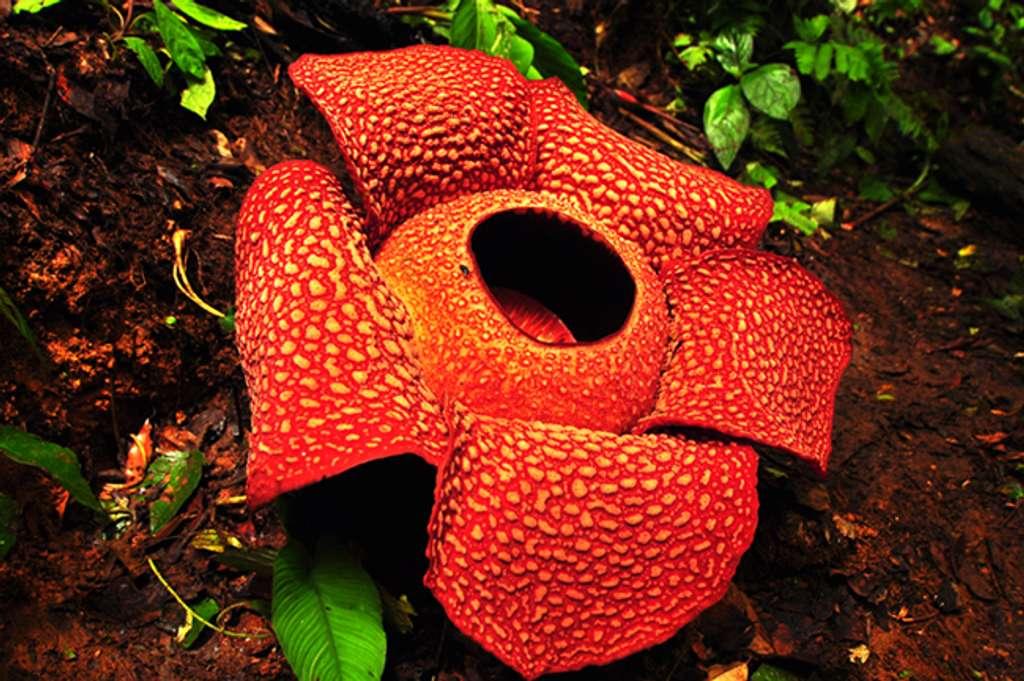 Flora Fauna Di Indonesia Karakteristik Contohnya