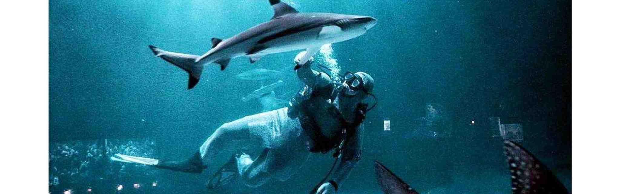 Tempat Wisata Di Jakarta Bawah Laut