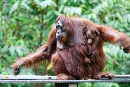 Taman Nasional Bukit Baka Bukit Raya, Hutan Tropika di Pulau Kalimantan, Traveloka Accomodation