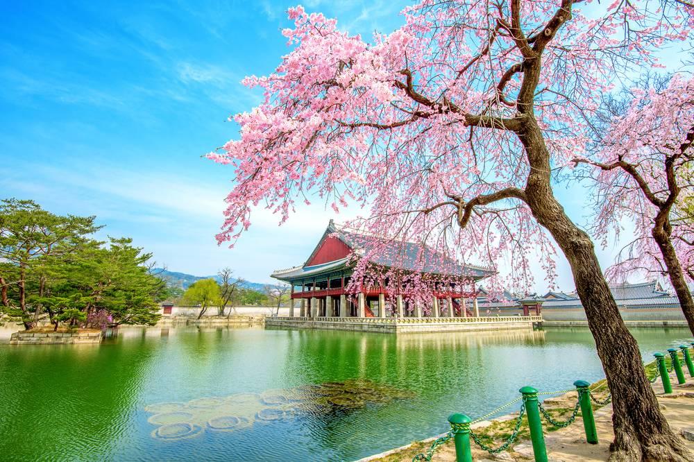 1557993378446 0b0c5e877c8271b1c6f73f0cd03171cb - 7 Rekomendasi Wisata Alam di Korea Selatan yang Menyejukan ati dan Mata
