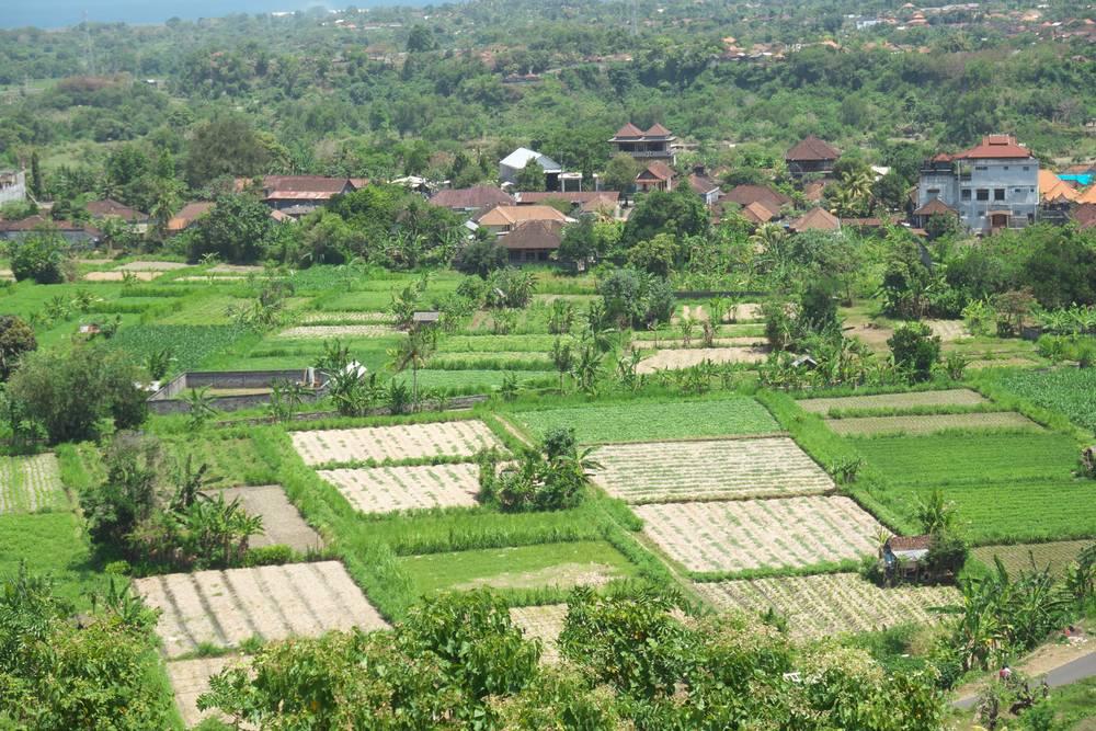 Bukit Belong