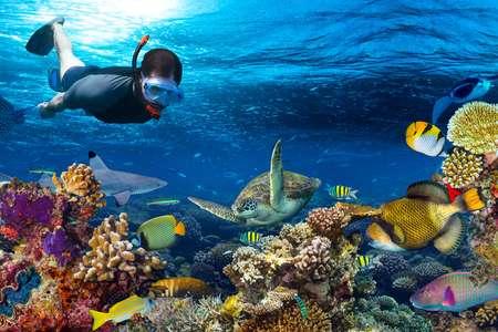 Lặn biển ngắm san hô:
