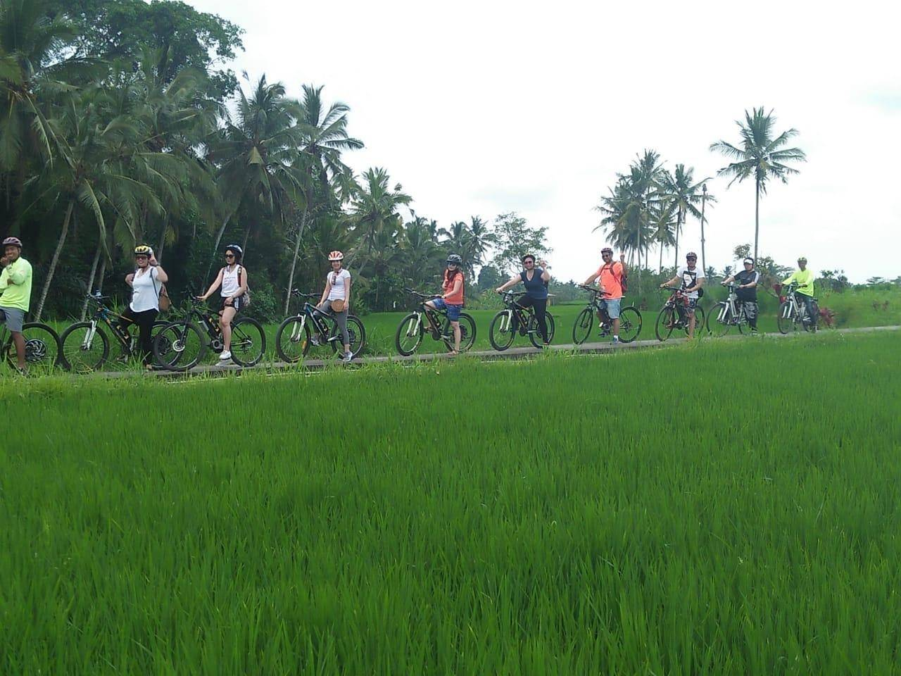 Bike Tour to Tegallalang Rice Terrace