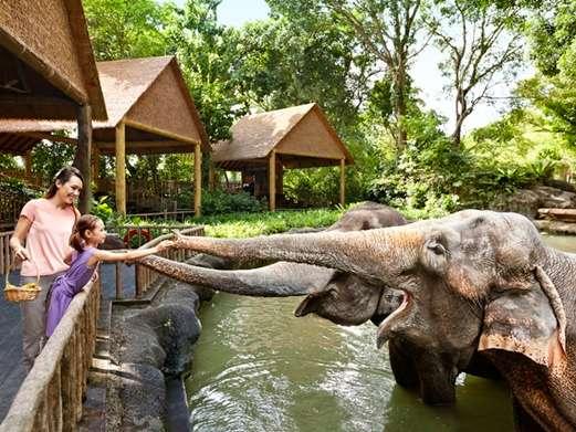 singapore zoo có gì