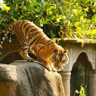 Taman Safari Prigen Tickets - Easy Access, Rp 110.000