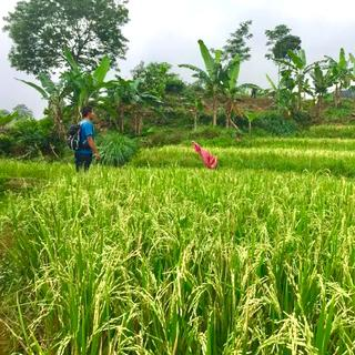 Private Family Walk in Cigobang Village Sentul - 2 Hours, Rp 225.000