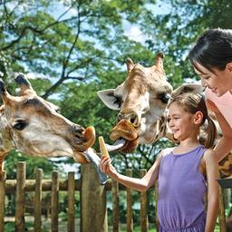 Singapore Zoo - SingapoRediscovers Vouchers, S$ 36.90