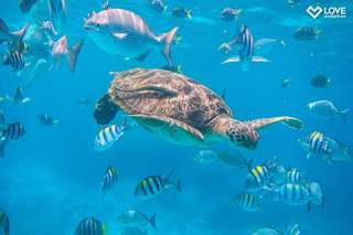 Similan Islands (by Love Andaman) - 1-day Tour, THB 1,470