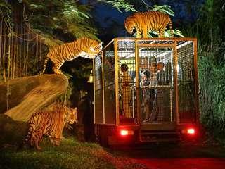 Bali Safari Park - Indonesian Residents, AUD 12.10