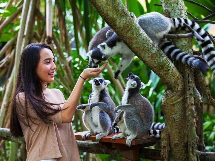 Bali Zoo Experience Tickets International Tourists
