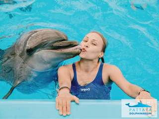Pattaya Dolphinarium Tickets, RM 36