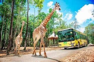 [SALE 20%] Vé Vinpearl Safari Phú Quốc, VND 650.000
