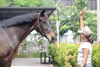 Tiket Branchsto Equestrian Park, Rp 17.500