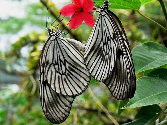 Bali Butterfly Park Tabanan Tickets