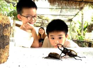 Siam Insect Zoo Tickets, THB 40