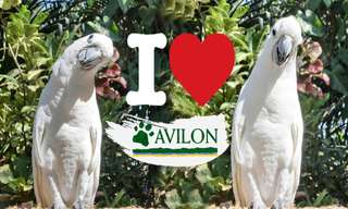Avilon Zoo Tickets, ₱ 550