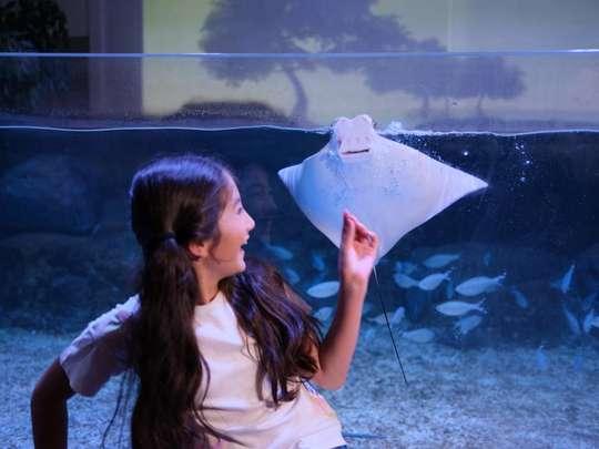 Jakarta Aquarium & Safari Tickets