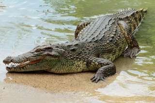 Melaka Crocodile Park Admission Tickets, RM 15.10