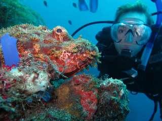 Tulamben Diving & Snorkeling by Bali Diving, ₱ 1,912.50