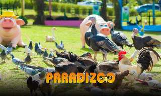 Paradizoo Theme Farm Tickets, ₱ 159