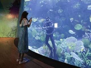 บัตรพิพิธภัณฑ์สัตว์น้ำแบงคอกซีไลฟ์โอเชียนเวิลด์, THB 550