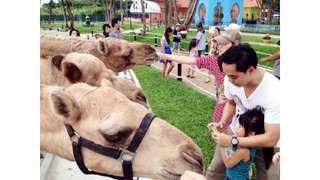 บัตรเข้าสวนสนุกและสวนสัตว์คาเมลรีพับลิก, THB 377.40