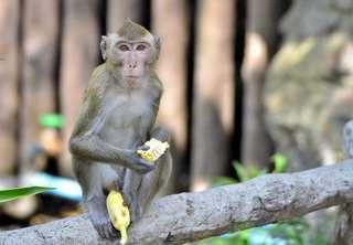 บัตรเข้าสวนสัตว์เปิดเขาเขียว, THB 228.20