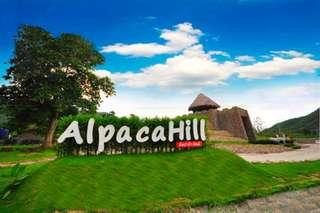 [SALE 26%] บัตรอัลปาก้าฮิลล์ (Alpaca Hill), THB 290