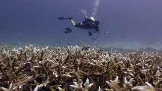 Scuba Diving Trip to Racha Noi and Racha Yai Islands - 1 Day - Local Dive Thailand, RM 310.10
