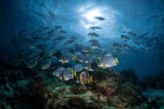 1 Day tour to Mantanani Island - Best Snorkeling in Kota Kinabalu, ₱ 2,692.40