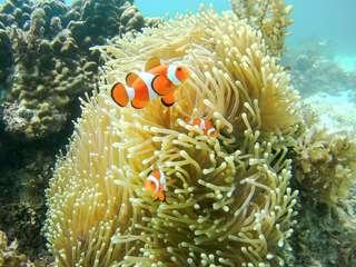 Mantanani Island Discover Scuba Diving - 1 Day Trip, ₱ 4,667.60