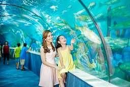 Vé Thuỷ cung Aquarium Times City , VND 100.000