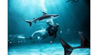 Tiket Seaworld Ancol - Easy Access, Rp 115.000