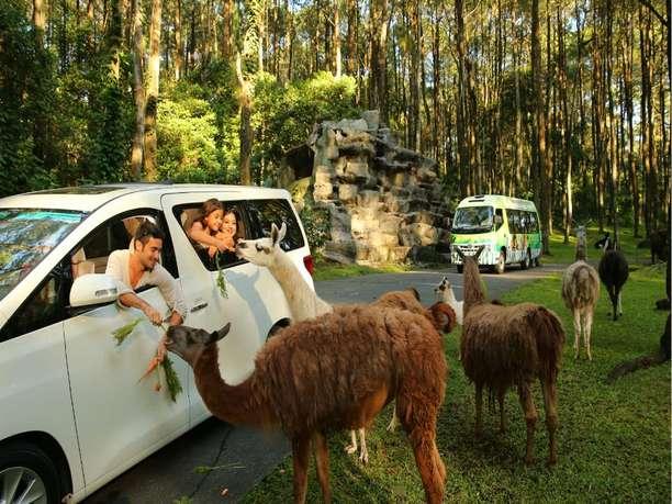 Taman Safari Prigen Tickets - Easy Access Exclusive Deal 2021