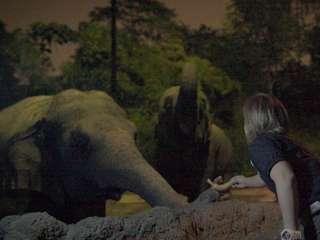 Feed Magnificent Asian Elephants at Night Safari Singapore, RM 2.87