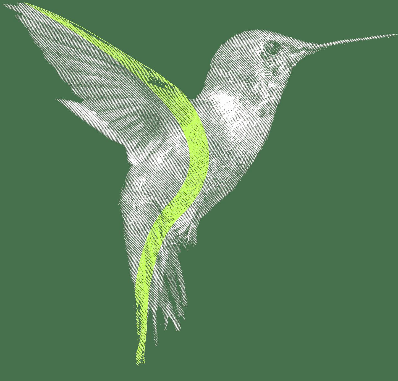 Un colibri fait sa part