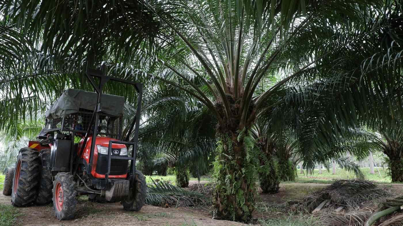 Domestic Demand Keeps Indonesian Palm Oil Industry Afloat amid Sluggish Export Markets