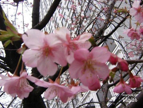 Kyoto - Flores no inverno japones
