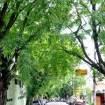 Que tal financiar o plantio de árvores com verbas da Saúde?