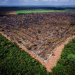 Deixar que as florestas se recuperem é a melhor forma de combater a emergência climática