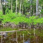 Como os Campos de Restauração de Ecossistemas podem reverter o processo de degradação da Terra