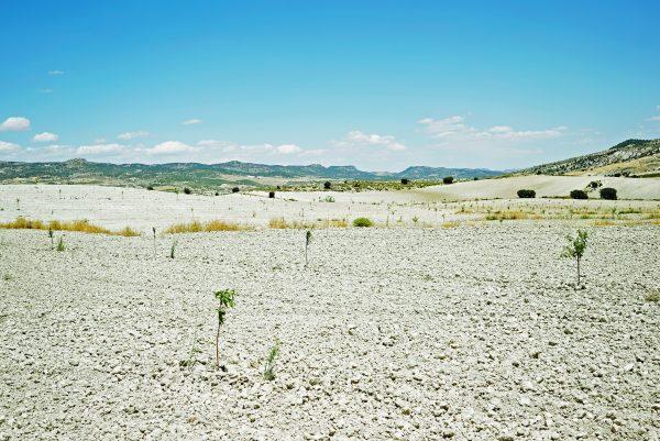 Campos de Restauração de Ecossistemas